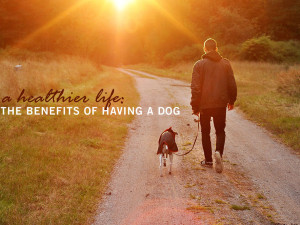 A Healthier Life: The Benefits of Having a Dog
