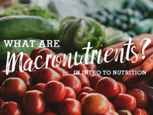 What are Macronutrients? An Intro to Nutrition